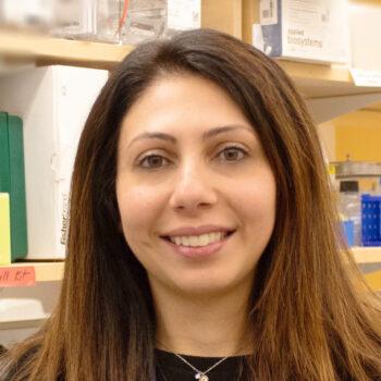 Abir Yamak, PhD